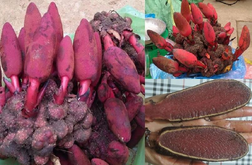 Giá nấm ngọc cẩu bao nhiêu tiền 1kg và mua nấm ngọc cẩu ở đâu tốt?