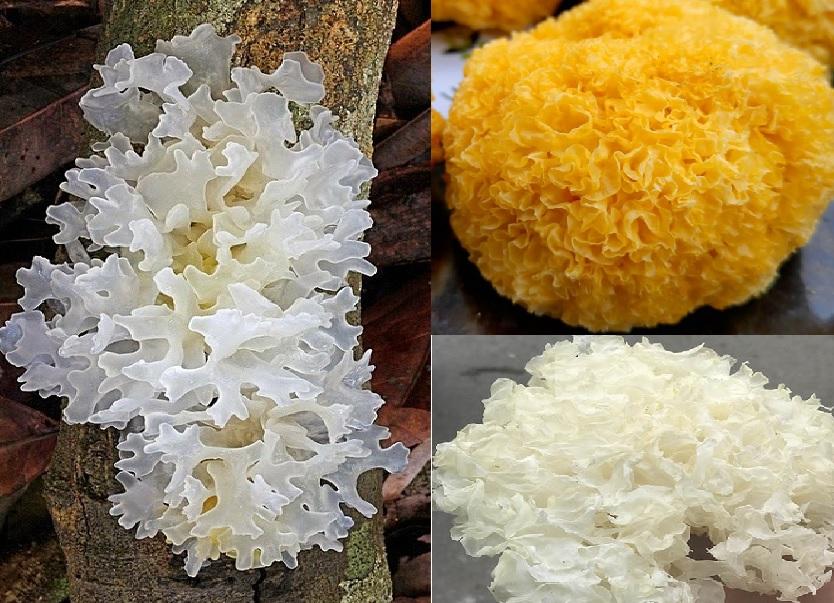 Giá trị thành phần dinh dưỡng của nấm tuyết có tác dụng gì?