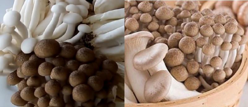 Nấm cẩm thạch có tốt không và tác hại của nấm cẩm thạch như thế nào?