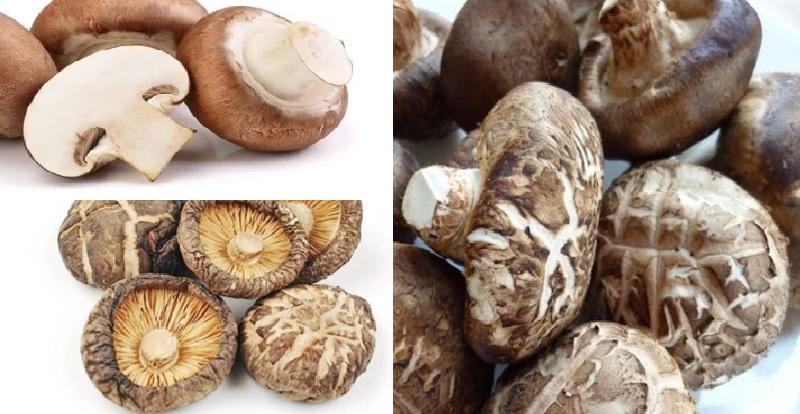 Nấm đông cô là gì và hình ảnh cây nấm hương tự nhiên mọc ở đâu?