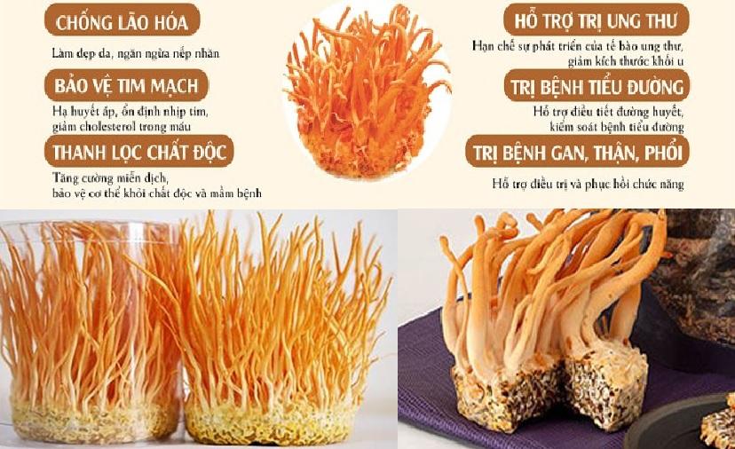 Nấm đông trùng hạ thảo trị bệnh gì từ giá trị thành phần dinh dưỡng của nấm