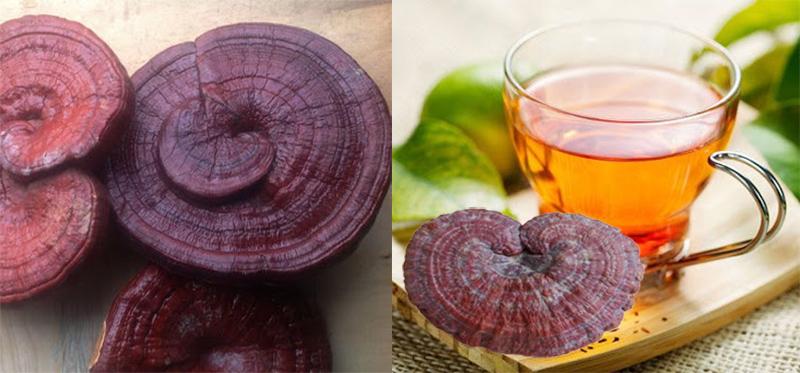 Nấm linh chi có tốt không khi sử dụng với nấm linh chi có độc không?