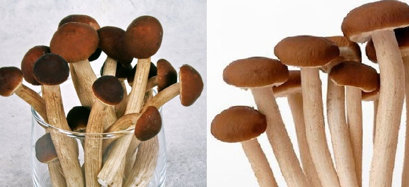 Nấm trân châu có tốt không với tác hại của nấm trân châu là gì?
