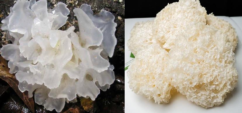 Nấm tuyết là gì và cây nấm mộc nhĩ trắng tự nhiên mọc ở đâu?