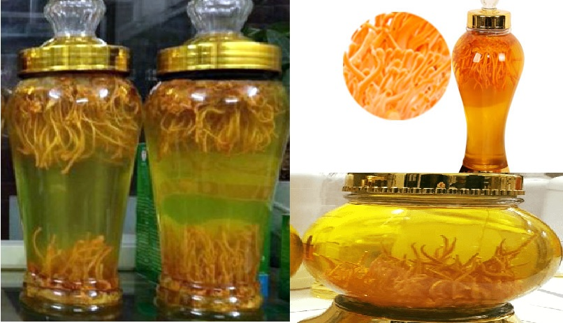 Rượu nấm đông trùng hạ thảo với tác dụng cách dùng của rượu nấm đông trùng
