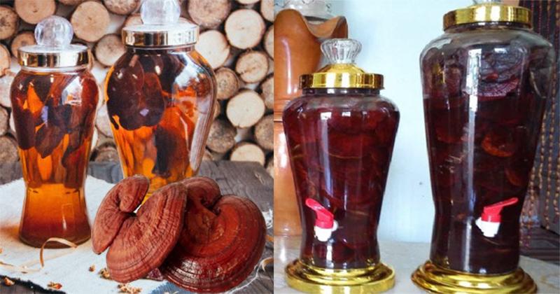Rượu nấm linh chi có tác dụng gì và cách chế biến rượu nấm linh chi