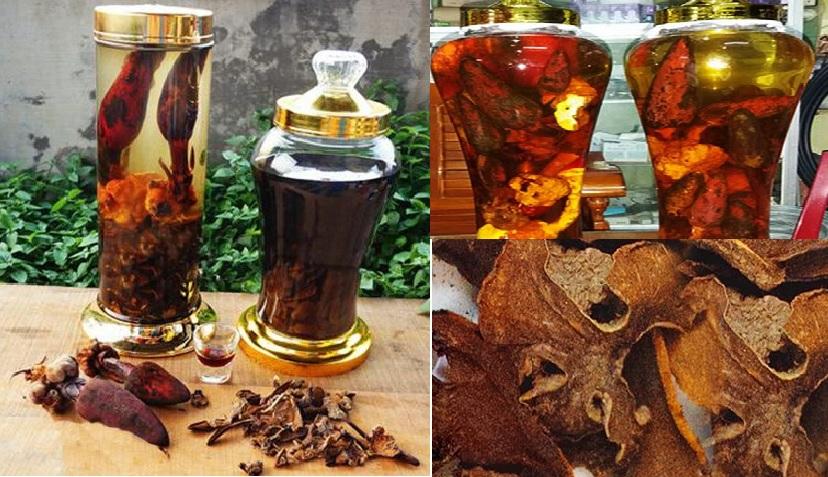 Rượu nấm ngọc cẩu với cách ngâm và tác dụng của rượu nấm ngọc cẩu