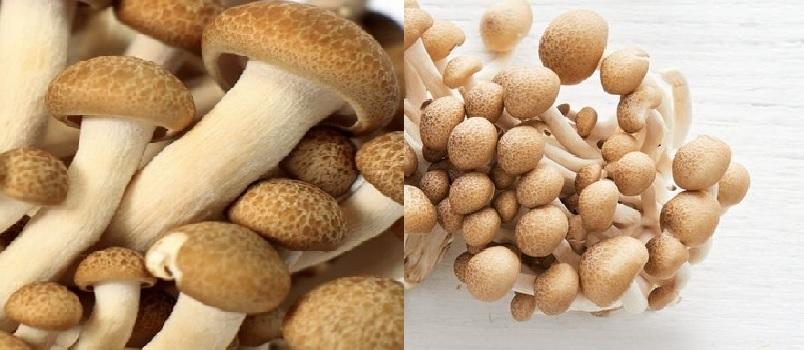 Tác dụng của nấm cẩm thạch với sử dụng nấm cẩm thạch trị bệnh gì?