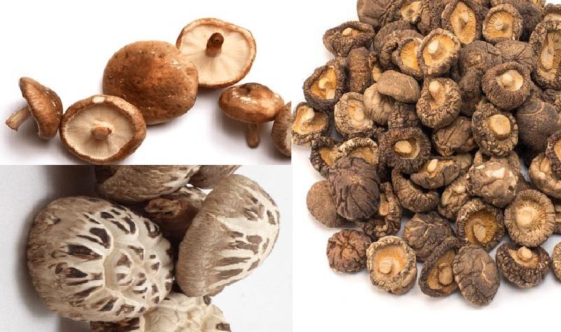 Tác dụng của nấm đông cô với công dụng và lợi ích của cây nấm hương