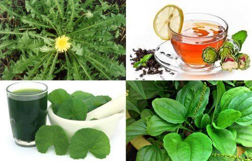 Cách giải độc gan từ thiên nhiên và thảo dược giải độc gan hiệu quả