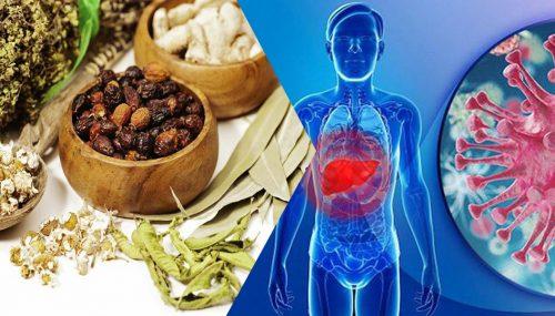 Cách hỗ trợ điều trị bệnh viêm gan B bằng Đông y mang lại hiệu quả tích cực