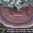 Cách chế biến nấm lim xanh rừng tự nhiên Tiên Phước điều trị bệnh