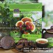 Cây nấm lim xanh rừng tự nhiên và công dụng của vitamin trong nấm lim