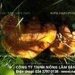 Địa chỉ bán nấm lim xanh tại Hà Tĩnh đảm bảo giá nấm lim rừng loại 1