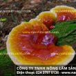 Nấm lim chữa bệnh ung thư – Cách dùng thảo dược nấm lim thiên nhiên