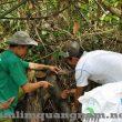 Nấm Lim xanh chữa bệnh ở Quảng Nam