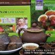 Nấm lim xanh Tiên Phước chữa bệnh gì? Tác dụng của nấm lim rừng
