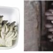 Nấm yến với đặc điểm tác dụng và cách dùng nấm yến ngon bổ nhất