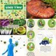 Phòng chống ung thư với nguyên tắc và chế độ ăn uống. Viện Y học