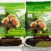 Tìm hiểu về nấm lim xanh rừng tự nhiên, thị trường nấm lim thật giả