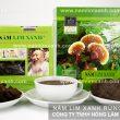 Tác dụng chữa bệnh của nấm lim xanh rừng tự nhiên Tiên Phước thật