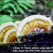 Tác dụng của nấm liêm xanh rừng chống lão hóa da, kéo dài tuổi xuân