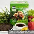 Tác dụng của nấm lim xanh Tiên Phước cách dùng nấm lim xanh rừng