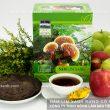 Tác dụng nấm lim rừng với bệnh xơ vữa động mạch – Cách dùng nấm lim