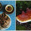 Tác hại của nấm lim xanh rừng và tác dụng phụ khi sử dụng nấm lim giả