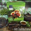 Tác dụng nấm lim xanh chữa ung thư, xem cách sắc uống nấm lim rừng